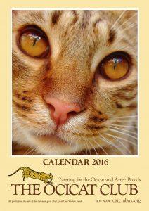 Cat Club Calendars